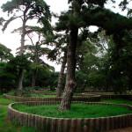 bannire avec base tronc et cercles